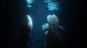 Banque-videos-requins-baleine