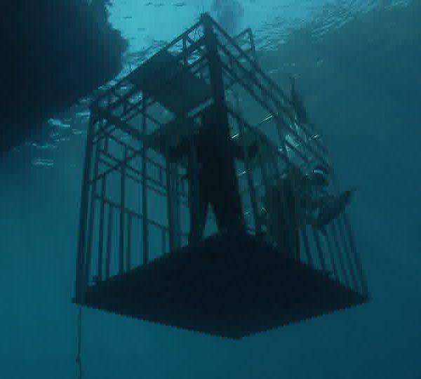 Cage_descend