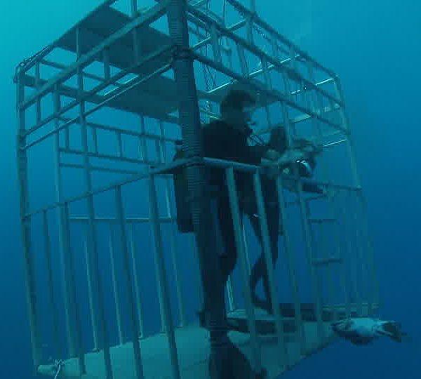 Cage_plongeur_appate_et_requin_blanc_dessous