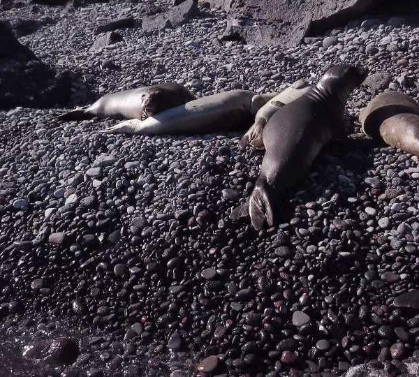 Otaries qui dorment sur la plage