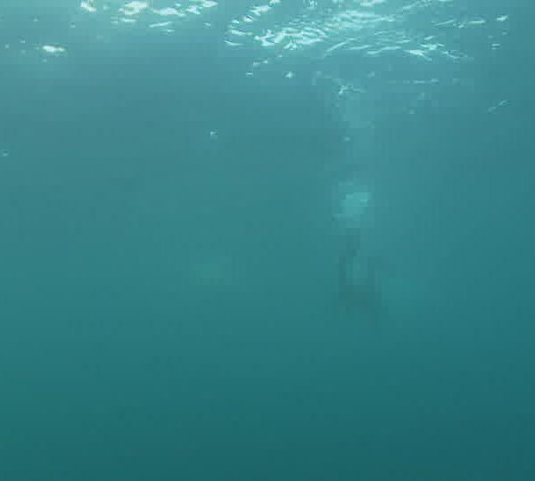 Ours_blanc_avec_plongeur_qui_recule.jpg