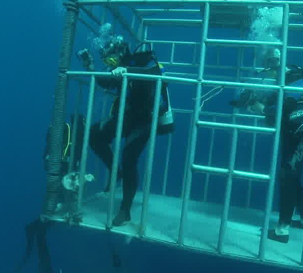 Plongeur_ecrase_appat_dans_cage