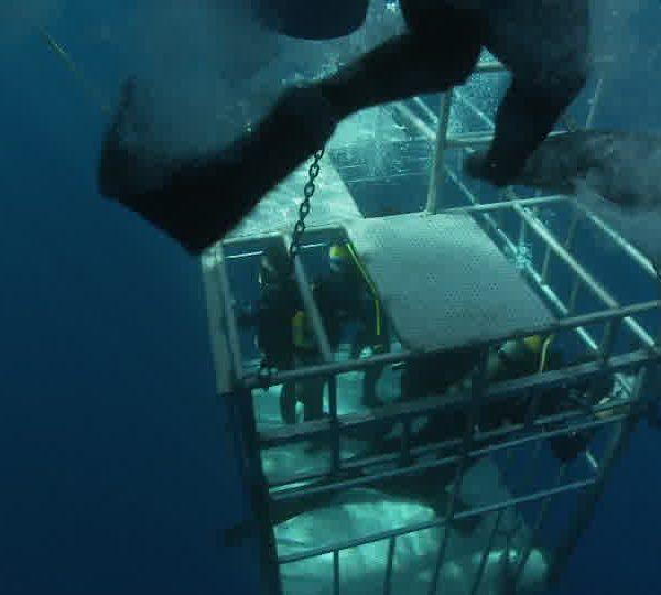 Plongeurs_dans_cage