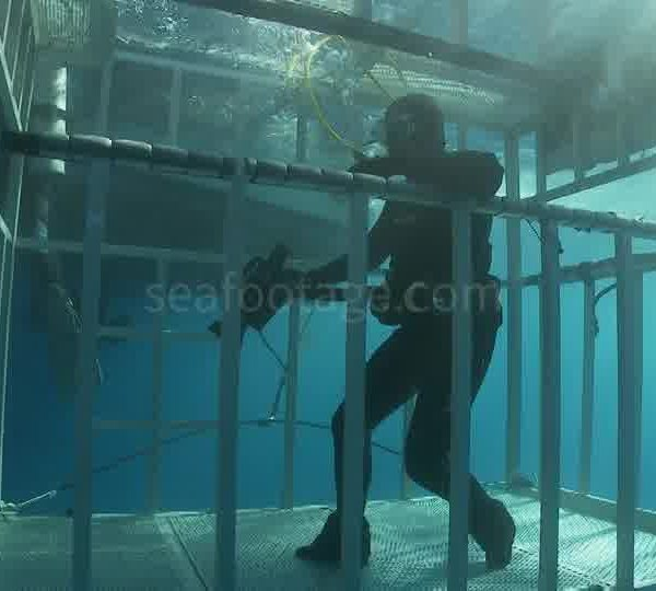 Plongeurs_dans_cage_surface