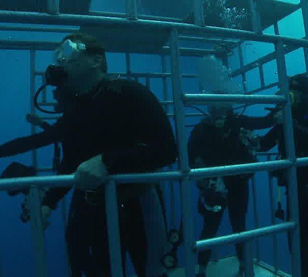 Plongeurs_dans_cage_vue_de_côte