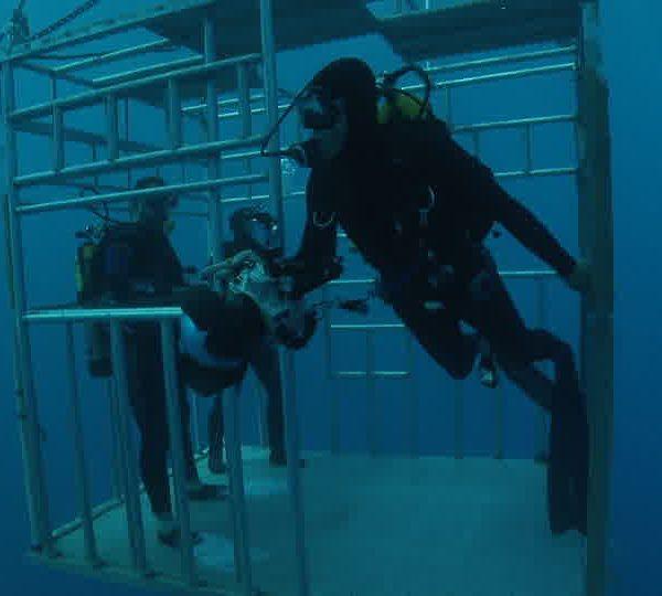 Plongeurs_sortent_da_la_cage