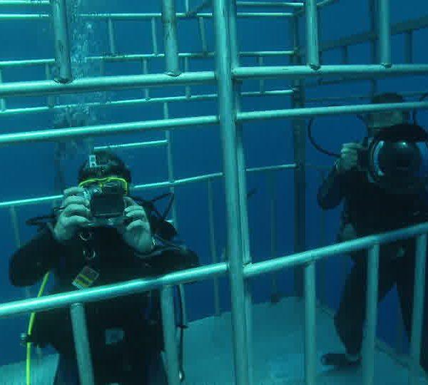 Plongeurs_touristes_prennent_photos_de_la_cage