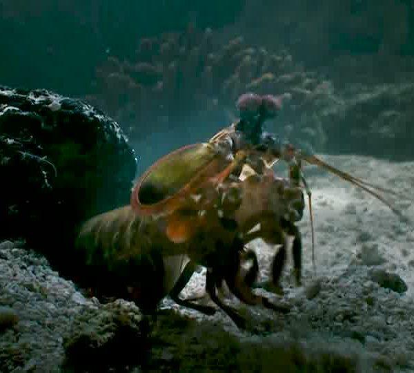 Un Ocean de Vie – La Squil – Le Mantis