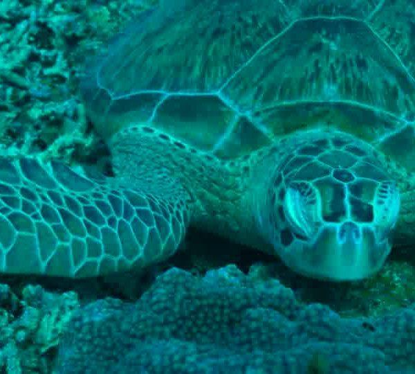 Un Ocean de Vie – La tortue