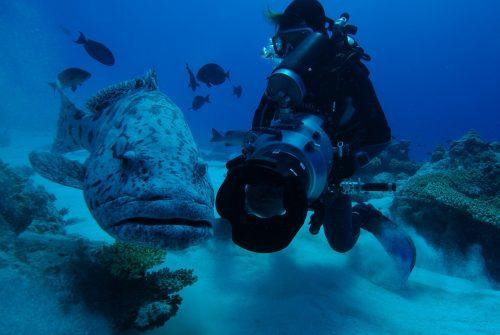 banque image video sous marine