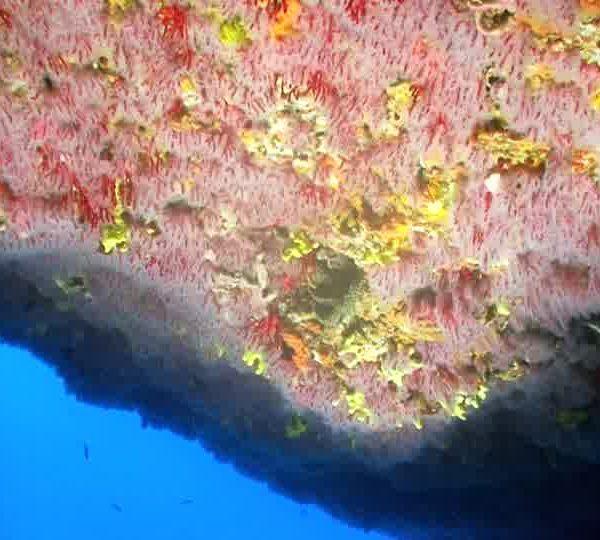 corail_WEB
