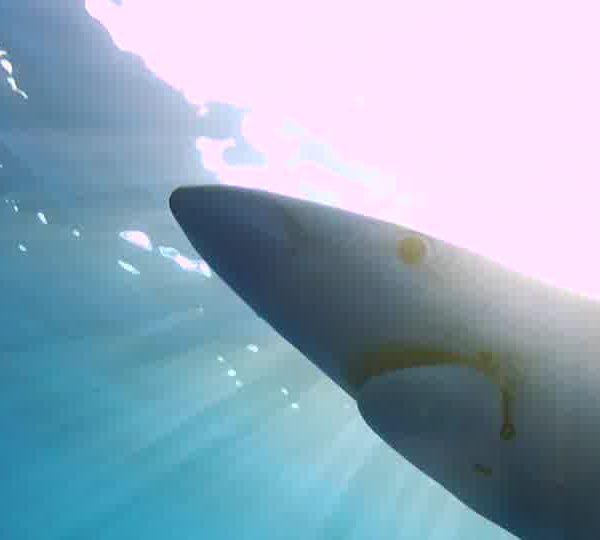 requin_WEB