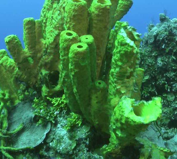 the_Sponge